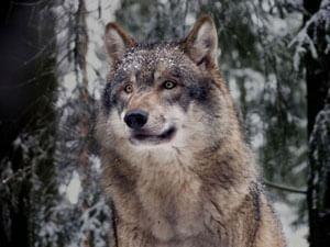 人妻出会いで俺は狼になる